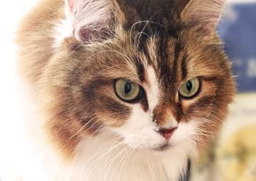 ナイアヒーリングサロンのスピリチュアル猫 アイちゃん