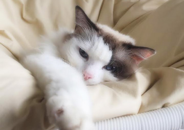 ナイアヒーリングサロンのスピリチュアル猫 みるく